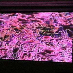 Botborg – New York City, USA – Microscope Gallery – 2015